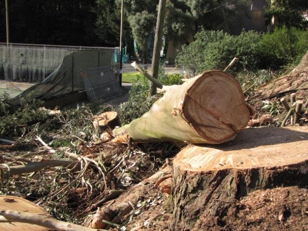 Log-on-Stump-sm