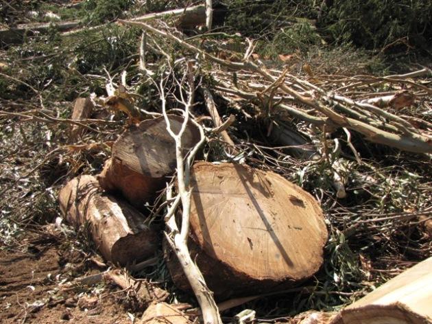 Stump-Branches-sm