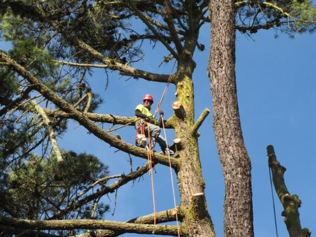 TreeCutPrep1