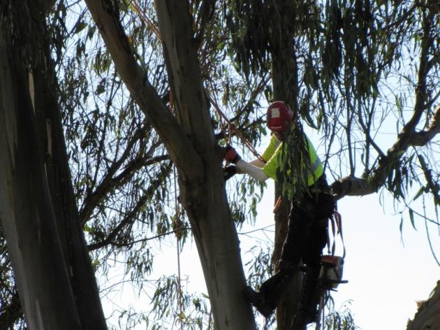 TreeCutting(01-10-2113)-4