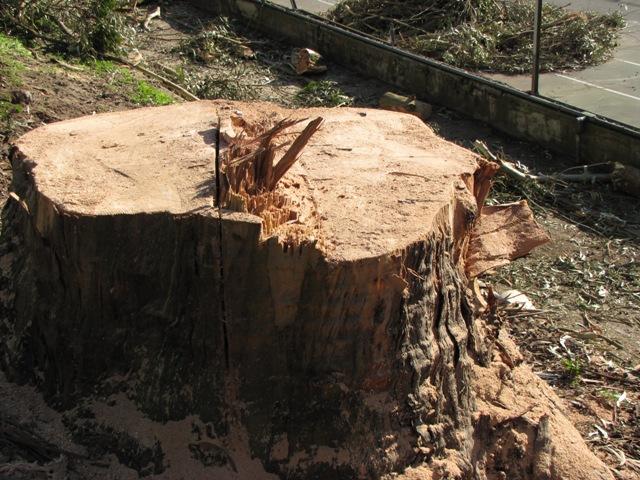 TreeStump-sm