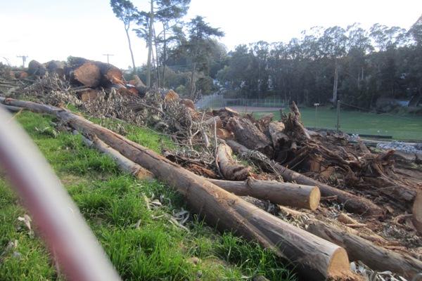 trees into trash 2