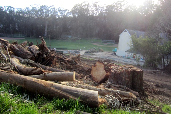 trees into trash