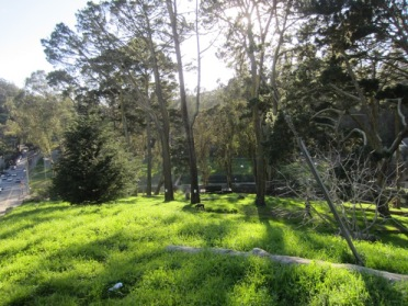 Doomed trees in Glen Canyon Park