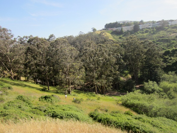 glen canyon park - how many of these trees will live