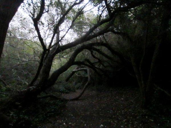 spiral grove