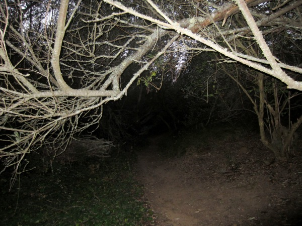 through low tree tunnels