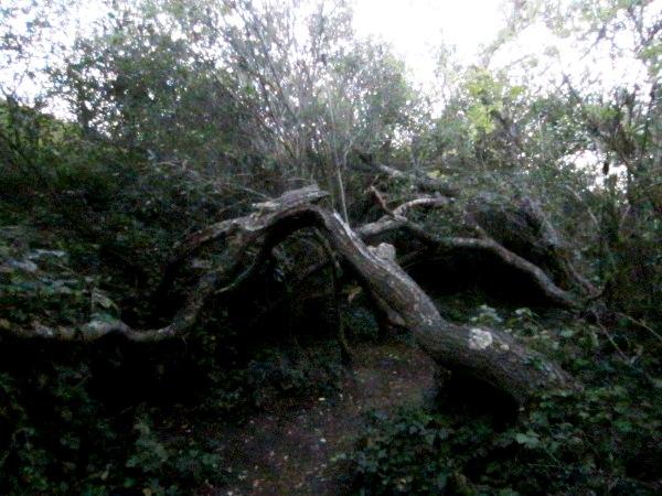 twisty tree
